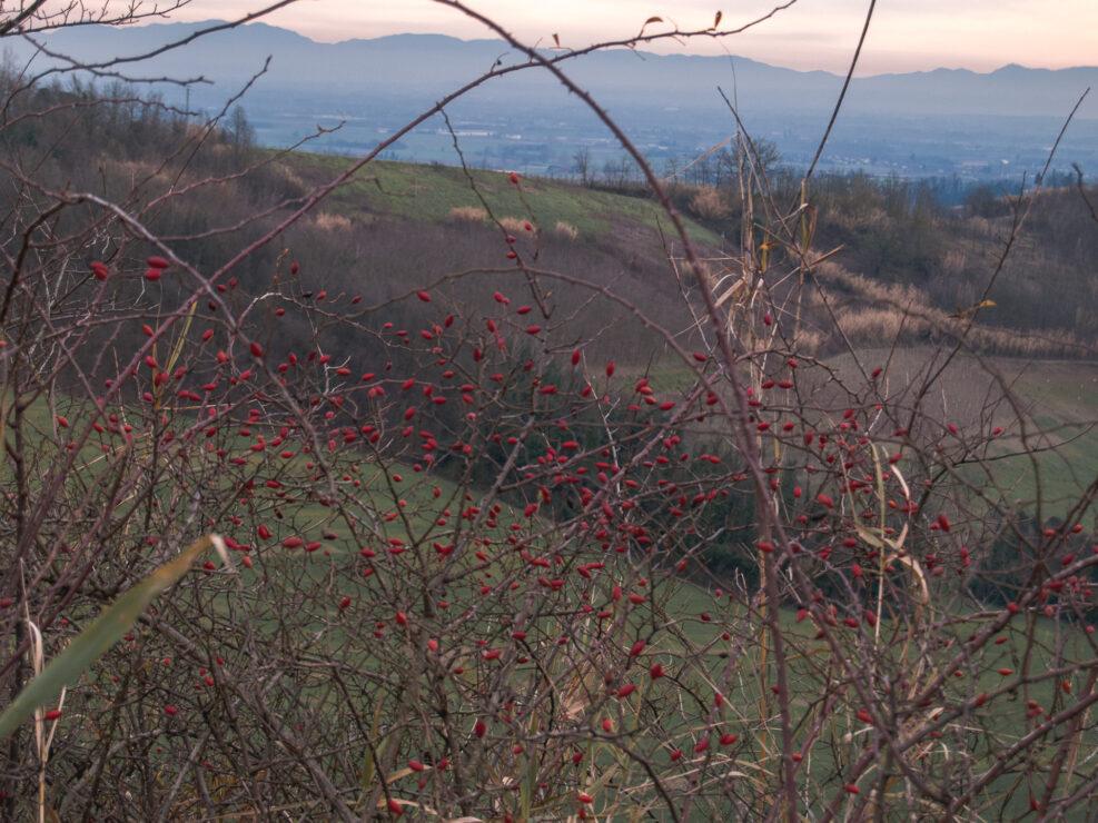 monferratMonferrato: fotografia d'invernoo: fotografia d'inverno