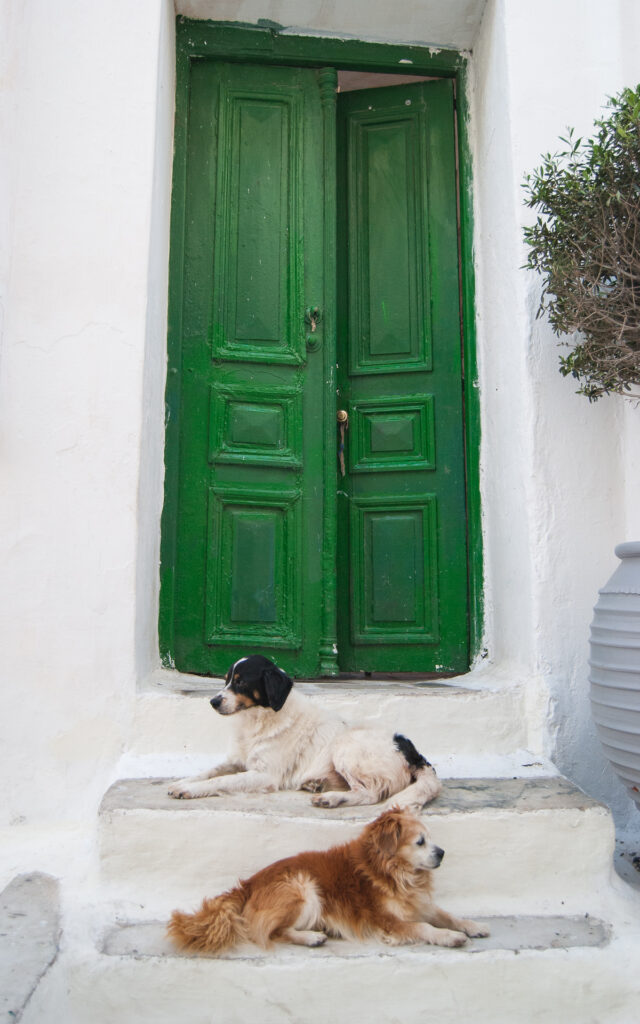 mykonos street photography two dogs