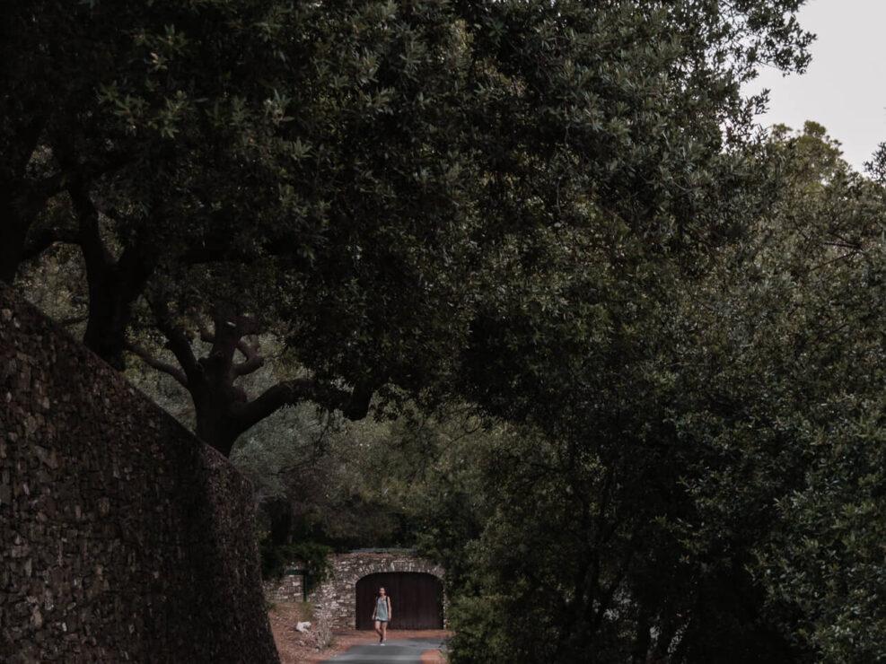 colla micheri fotografia paesaggio strada tra alberi