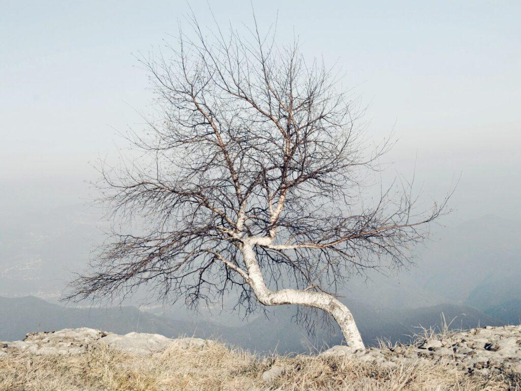 come fare foto più nitide - foto di paesaggio albero