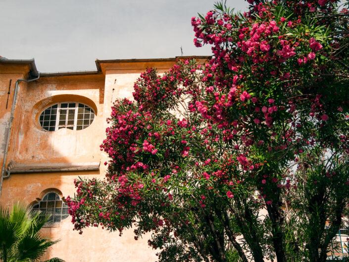 chiesa oleandro rosso foto
