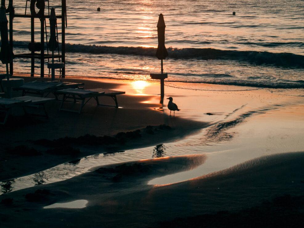 spiaggia gabbiano all'alba fotografia