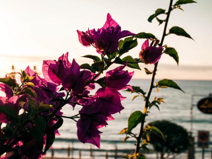 fiore viola lungomare