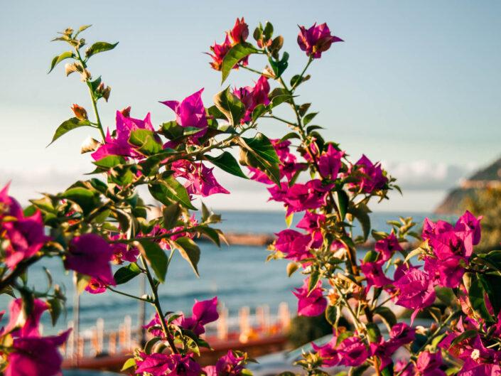 fotografia fiori viola