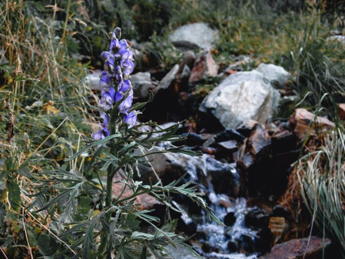 Fotografia di montagna: Passo Verrobbio