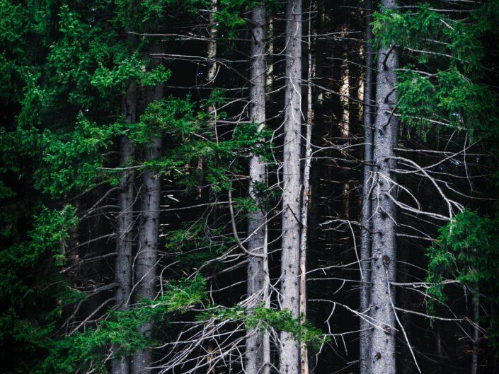 fotografia sentiero casere montagna boschi alberi