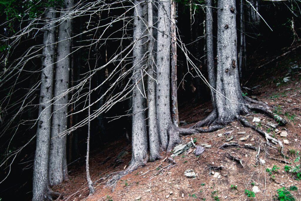 landscapes photography: a portfolio selection