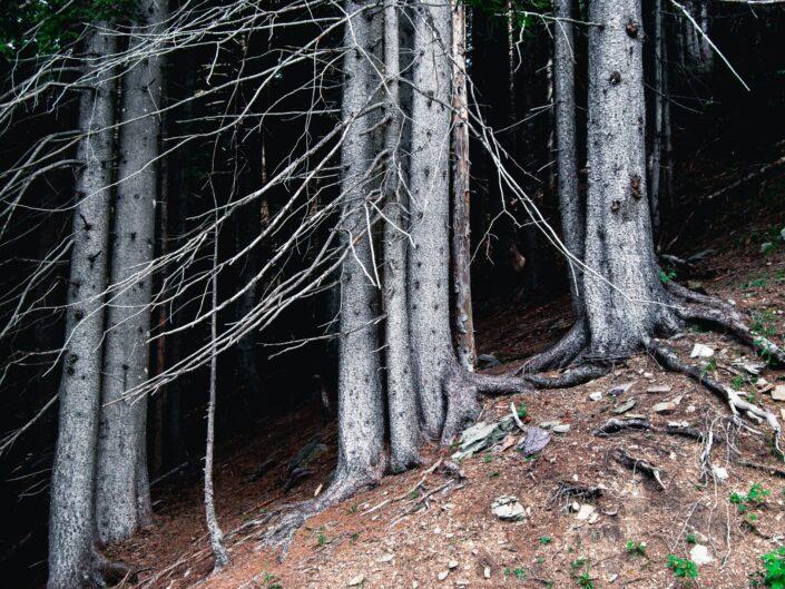 fotografia sentiero casere montagna tronchi foresta