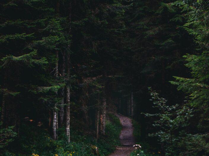fotografia sentiero casere montagna boschi sentiero