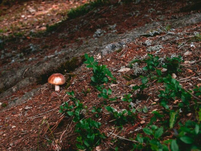 fotografia sentiero casere montagna boschi funghi