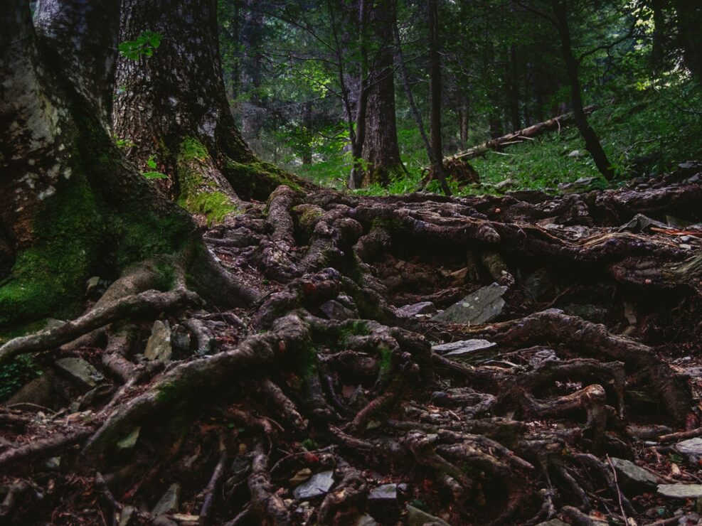 fotografia sentiero casere montagna boschi