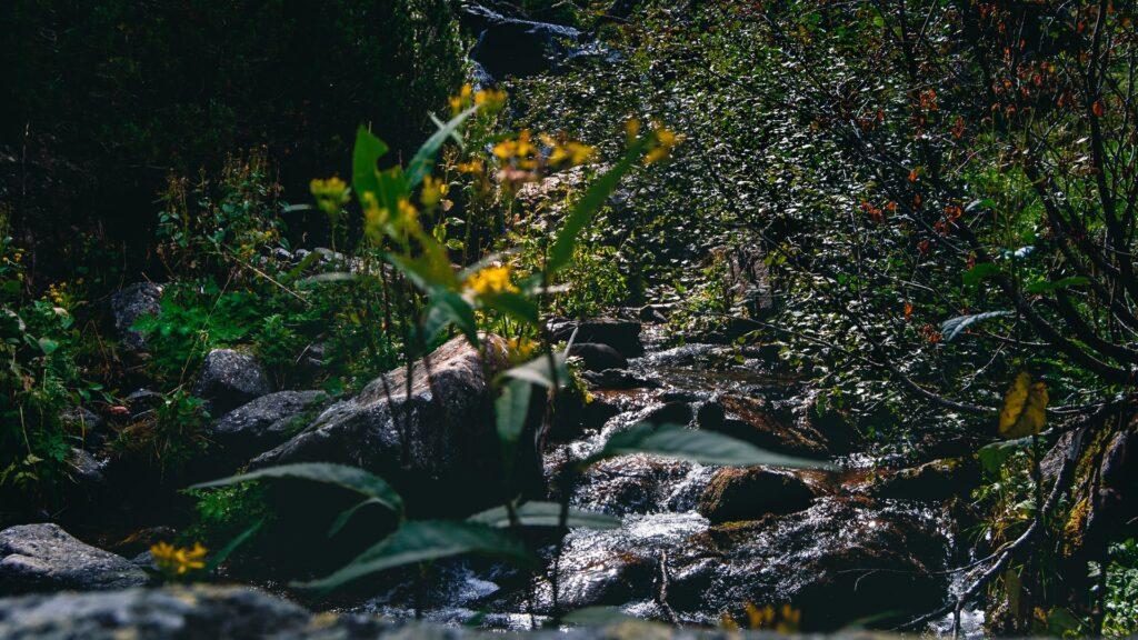 fotografia sentiero casere montagna torrente boschi