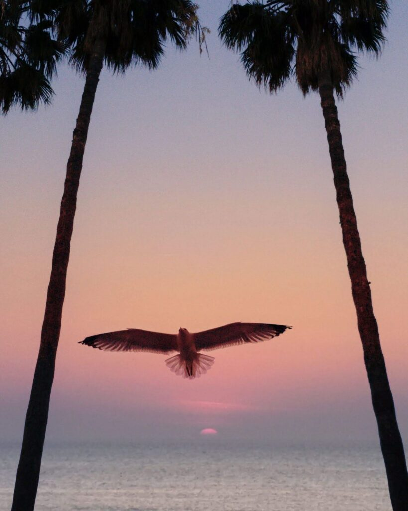 landscapes photography: a portfolio selection - gabbiano tramonto