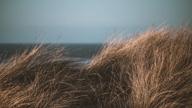 come usare il contrasto in fotografia per creare l'effetto dreamy